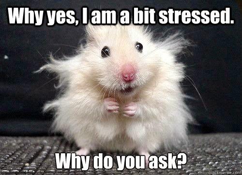 stressed meme
