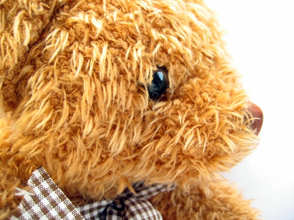 furry-bear-2-1317260